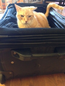 Boss in Suitcase death stare